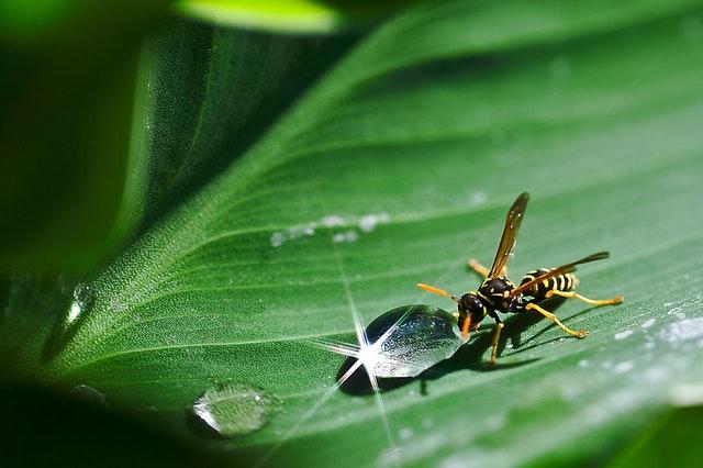 De meest voorkomende vliegende insecten in Nederland