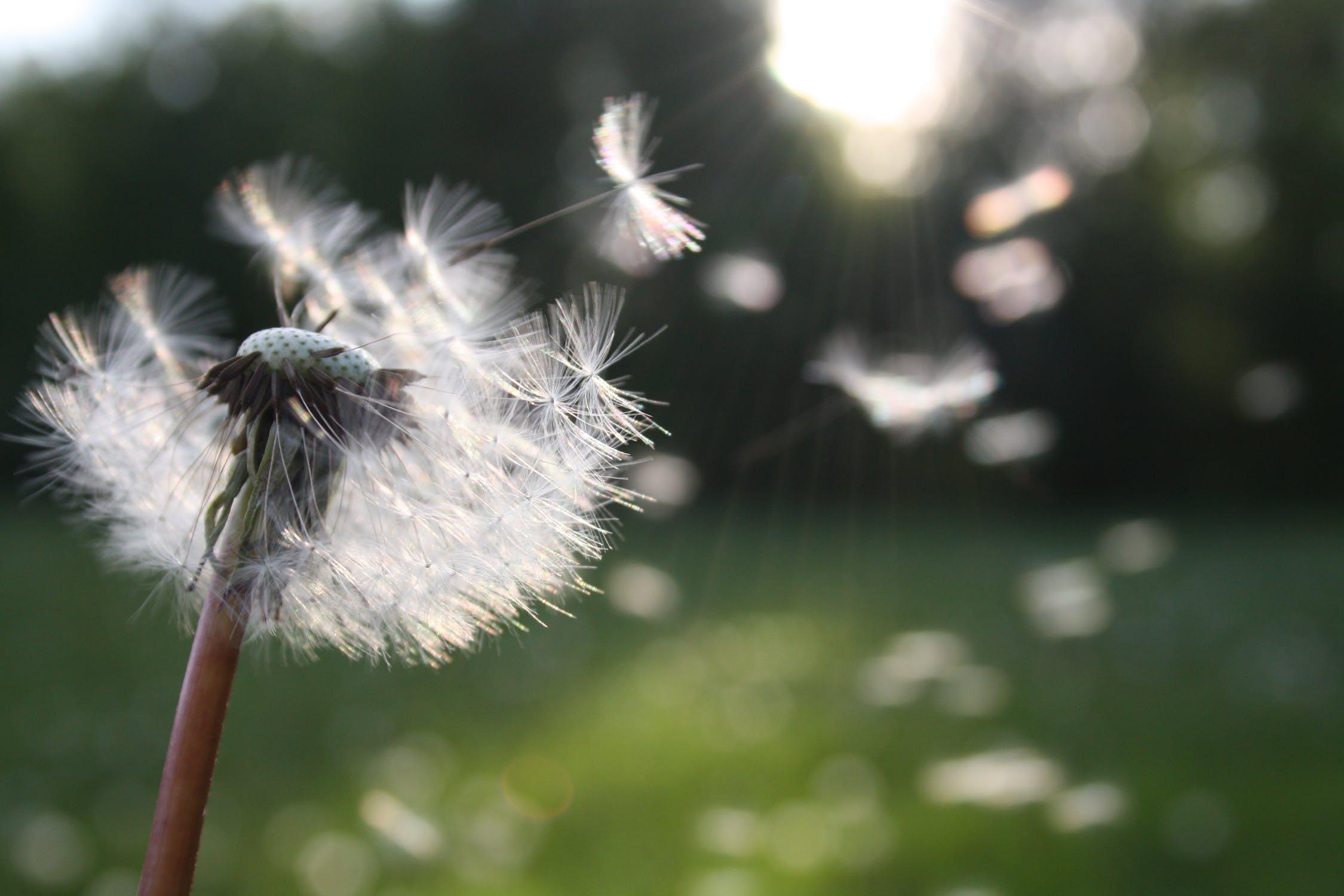 De invloed van hooikoorts en pollen op je gehoor